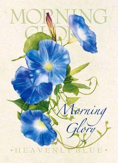 flower-morning glory Sherri Buck Baldwin