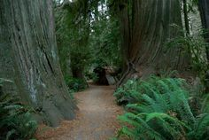 Redwood National Park, Ca., You have to see it!!