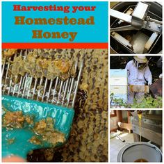 A step by step look at how to harvest honey from your homestead.   Homestead Honey