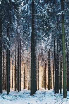 Shared by Affan. Find images and videos about beautiful, nature and amazing on We Heart It - the app to get lost in what you love. Native Country, Ardennes, Out Of Focus, How To Take Photos, Nature, Cool Photos, Around The Worlds, Explore, Landscape
