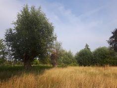 en tuin met vele verrassende hoekjes en lange zicht-assen tot in het verre landschap.