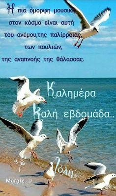 Good Morning, Summertime, Animals, Anna, Seasons, Beautiful, Sayings, Quotes, Buen Dia