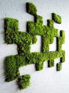 Decora una pared con musgo