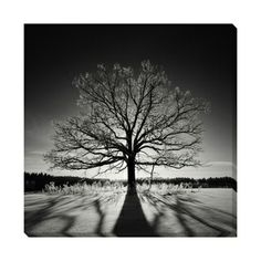 B&W Tree of Strength Oversized Gallery Wrapped Canvas