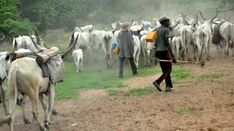 Herdsmen-farmers crisis: A fallout of climate change