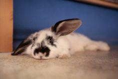 Looks like a tired bunny...so am I, little bunny.