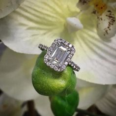 If only we could get diamond rings to grow in our garden...