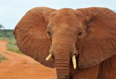 Urge California State Senators to protect elephants and rhinos | IFAW - International Fund for Animal Welfare