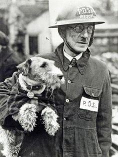 "Wire-haired fox terrier ""Beauty"", PDSA (People's Dispensary for Sick Animals) Superintendent Bill Barnet, who was credited with rescuing 63 animals from the ruins of the London Blitz, *Welsh Terrier. Perro Fox Terrier, Welsh Terrier, Airedale Terrier, Wire Fox Terriers, Terrier Mix, Mon Combat, Wire Haired Terrier, Into The Fire, Military Dogs"