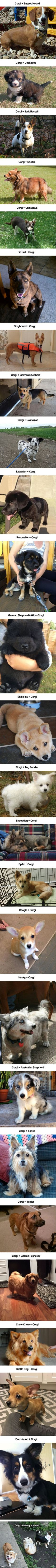 26 Corgeous Corgi Mixes That Are Fluffily Bootiful<<<< THEYRE ALL SO ADORABLE<3