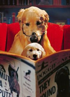 This is a great picture of a Golden Retriever dog and pup reading the newspaper. Love My Dog, Puppy Love, Baby Animals, Funny Animals, Cute Animals, Tier Fotos, Mans Best Friend, Dog Life, Animals Beautiful