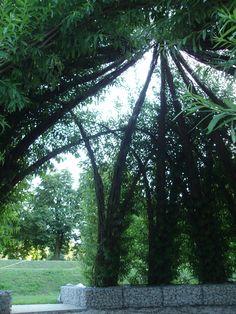 weidendom von innen - willow dome