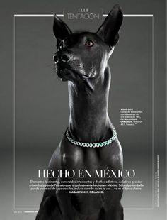 Elle Mexico | #Editorial #Layout Lo puse en amigos peludos aunque viéndolo bien, Mr. Xolozcuintle es completamente calvo.
