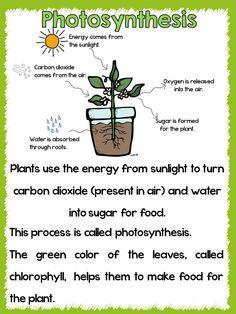 Life of a Plant! Kijk op YouTube duidelijke filmpjes!. Toets fotosynthese in.