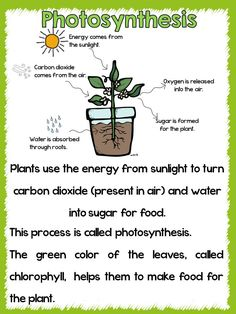 Life Cycle of a Plant!