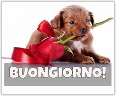 Immagini BUONGIORNO Belle per Whatsapp Funny Good Morning Memes, Italian Memes, Good Morning Good Night, Animal Memes, Animals And Pets, Dog Food Recipes, Teddy Bear, Puppies, Humor