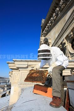 Bees at the Paris Opera House, by Eric Tourneret, The Bee Photographer
