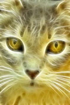 =^. .^= Fractal Cat =^. .^=