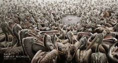 A giant flock of pelicans gathers around a single fish to advertise a sale at the clothing store. Better be ready to fight...