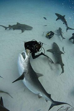 why would you be putting your hand that close to a tiger shark's mouth? I dunno.