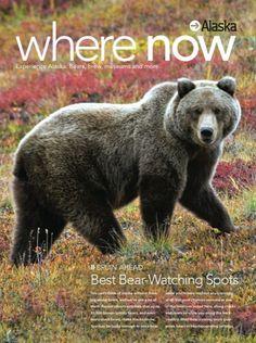 Best Bear-watching spots in Alaska - WhereTraveler    #bear #alaska #where