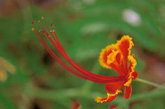 Long stamen red yellow flower (right) by Shreeharsh Ambli on 500px
