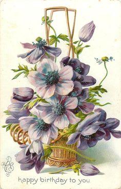 anemonies, violet flowers in wicker basket, bud & bloom on table