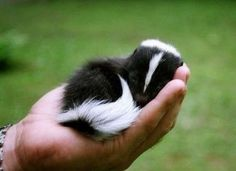 Top 10 Cutest Baby Animals Ever You Want To Put In Your Hand - ActingLikeAnimals.com