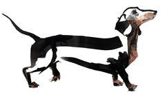 series of three original dog paintings displayed at Pick Me Up 2013 #dachshund #sausagedog #sarahmaycock #pickmeup #handsomefrank