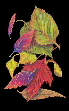 Leaves fall leaves ~ colored pencil on black ~ terri croghanfall leaves ~ colored pencil on black ~ terri croghan Fall Drawings, Colorful Drawings, Pencil Drawings, Fall Leaves Drawing, Leaf Drawing, Autumn Art, Autumn Leaves, Crayons Pastel, Black Paper Drawing