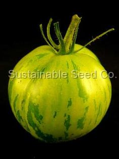 Green Zebra Tomato Seeds - Heirloom Seeds: Sustainable Seed Company.  Tasty with texture almost like a very ripe peach.