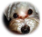 Dog Tear Stains On Pinterest Dog Shedding Remedies