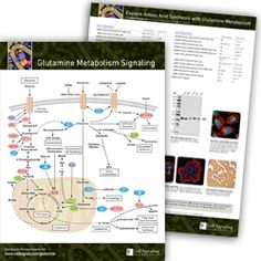 Key Signaling Pathways and Diagrams B Cell, Cell Growth, Amino Acids, Pathways, Metabolism, Paths, Walking Paths
