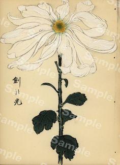 Lovely KORIN ukiyo-e Japanese woodblock original by Antique Prints, Chrysanthemum, Geraniums, Camilla, Poppy, Period, This Book, Delicate, Japanese