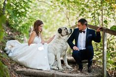 How to Include Your Dog in Your Wedding #doglovers  #dogsclub  #dogislove  #puppy  #puppies  #dogs  #k9  #petdogs  #dogsworldwide  #cutedogs  #cutepups  #pups  #dogbreeds  #crossbreed  #pets  #pet  #cute  #toydogs  #smalldogs  #dogsbreeds  #bigdogs  #animals  #mixedbreed  #bigdogs