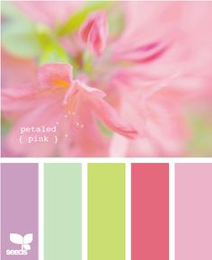 petaled pink-these colors would work for my living room---Maybe? more purple and green, less pink