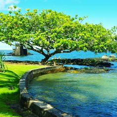 We were here on our HoneyMoon!!  Coconut Island, Hilo, Hawaii. P.S.  Its even better in Person!