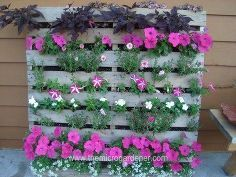20 creative ways to upcycle pallets in your garden, gardening, pallet, repurposing upcycling, Hardwood pallet upcycled into a stunning vertical garden perfect for a narrow balcony or limited space Repeating coordinated colours works well You can find the DIY instructions in the post