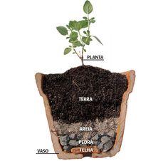 Iniciar sua horta em vasos não é um bicho de sete cabeças, mas assim como qualquer coisa na vida tem pequenos detalhes que quando são coloc...