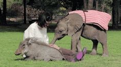 Casual Day With A Baby Elephant And A Warthog (gif)