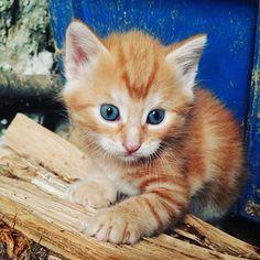 Bonne journée à tous ! Que cette semaine soit bonne et productive, et que vos lectures soient parfaites 😙📚  .  #booktube #bookstagram #catstagram #love #kitty #passionlecture #bibliophile #vscobooks #catlife #cute #picoftheday