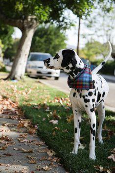 DIY: Dog Bandana