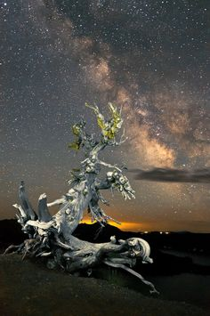 ~~Milky Way, White Bark Pine ~ Crater Lake, Oregon by Abe Blair~~