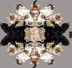 """""""Kittens"""" wrapping paper 