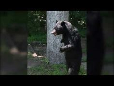 Internet Mourns Apparent Death Of Pedals, A Real Stand-Up Bear : The Two-Way : NPR