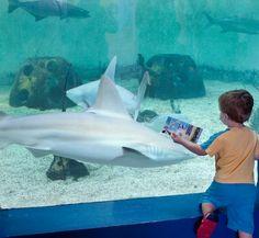Mote Marine Laboratory & Aquarium located in nearby Sarasota Bradenton Beach Florida, Florida Beaches, Vacation Memories, Vacation Spots, Lido Beach, Venice Florida, Longboat Key, Anna Maria Island, Siesta Key