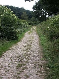 """Old Salt Route in Northern Germany – historical pavement near Breitenfelde. The Old Salt Route was a medieval trade route in northern Germany, one of the ancient network of salt roads which were used primarily for the transport of salt and other staples. In Germany it was referred to as Alte Salzstraße.    Salt was very valuable at that time and, consequently, was sometimes known as """"white gold."""""""