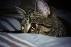 Kaninchenfan Lucky - Mein Kaninchenloch: Schnucki is hidding again to kill the clock that woke him up hehe ^_~   #cats #katzen #stubentiger #kitty   http://kaninchenfanlucky-meinkaninchenloch.blogspot.de/2014/04/schnucki-is-hidding-again-to-kill-clock.html