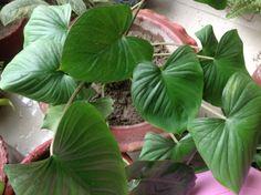 My houseplant