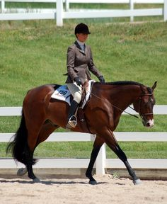 Hunter Under Saddle is the English equivalent of a Western Pleasure class. Horses compete in a group, on the rail and in both directions of. Andalusian Horse, Friesian Horse, Arabian Horses, Palomino, American Quarter Horse, Quarter Horses, Hunter Under Saddle, Hunt Seat, Western Pleasure